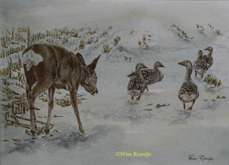 Wim Romijn - 'Roe goat in the midst of greylag geese'